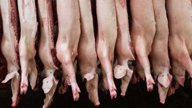 Photo of Umweltbundesamt fordert Halbierung des Fleischkonsums