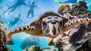 Photo of Neue Bedrohung für australische Korallenriffe