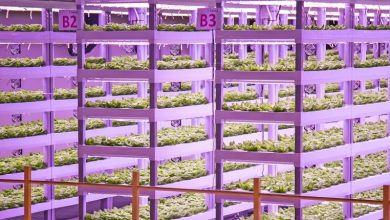 Photo of Wenn der Salat im Supermarktregal wächst