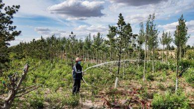 Photo of Mit Bäumen gegen den Klimawandel – China setzt auf Waldstädte und die Große Grüne Mauer